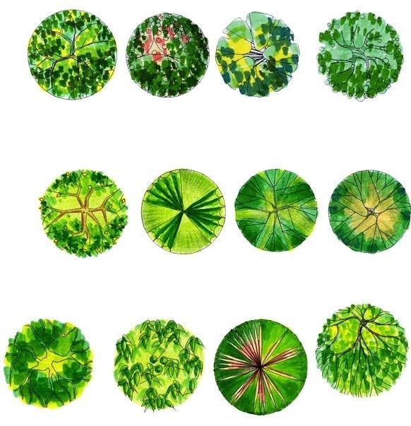 植物平面图的画法示例