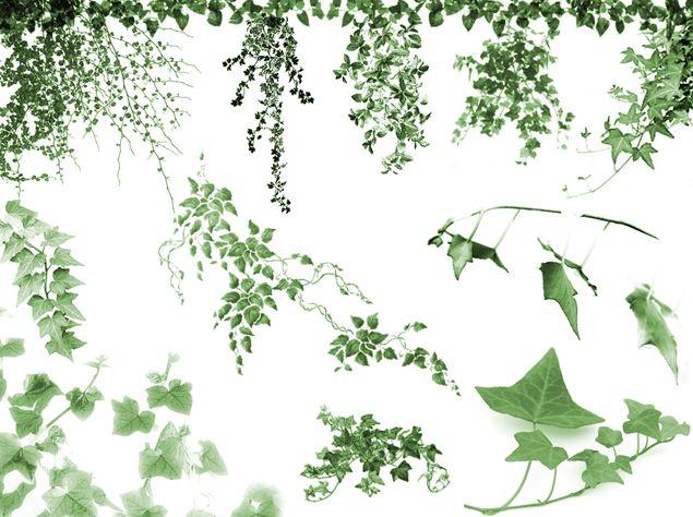 (2)藤蔓 绿植